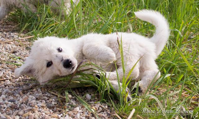 DSC_0223-1 %Hundeblog