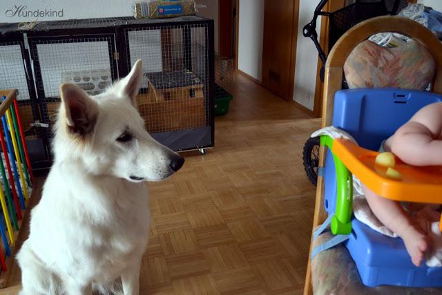 Baby-Hund28129-1 %Hundeblog