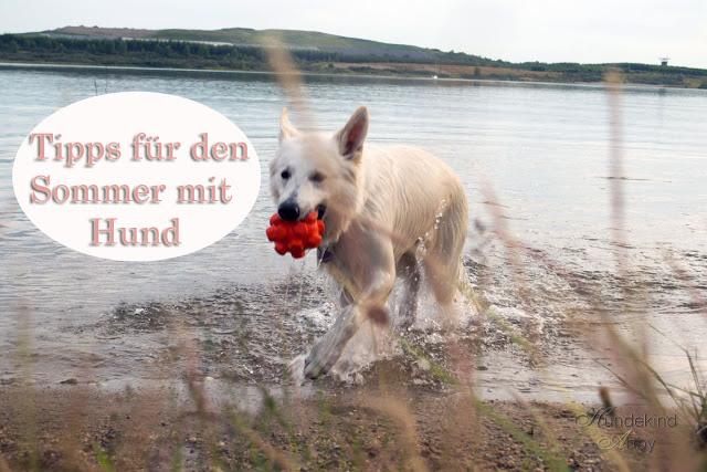 Tipps_fC3BCr_den_Sommer-1 %Hundeblog