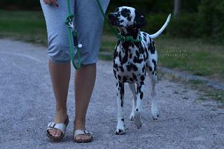 Amber5-1 %Hundeblog