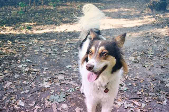 DSC_0868-1 %Hundeblog