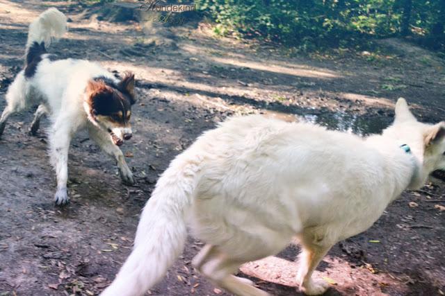 DSC_0869-3 %Hundeblog