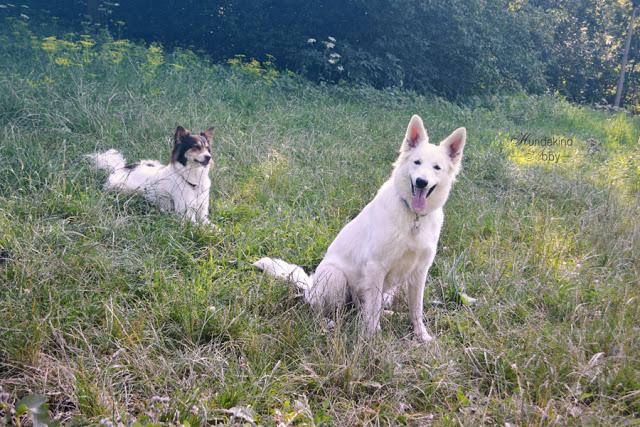 DSC_0883-1 %Hundeblog