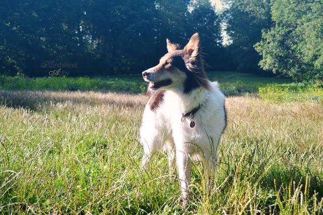 DSC_0888-1 %Hundeblog