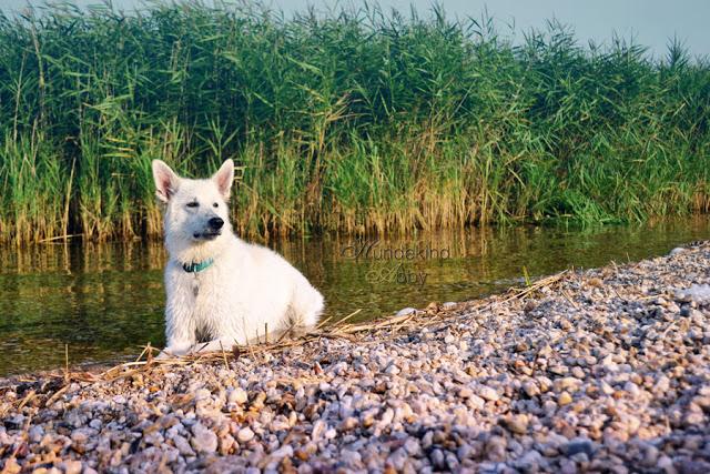 DSC_0895-1 %Hundeblog