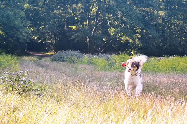 DSC_0898-1 %Hundeblog