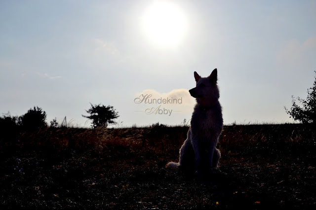 DSC_0983-1 %Hundeblog