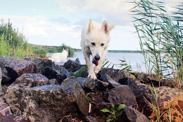 IMG_0165-1 %Hundeblog