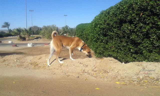 20150928_081410-1 %Hundeblog
