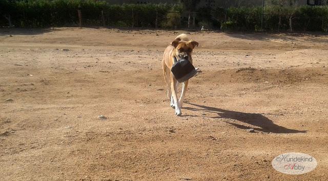 20150928_081523-1 %Hundeblog