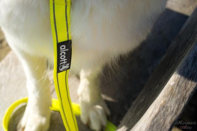 Alcott_1-1 %Hundeblog