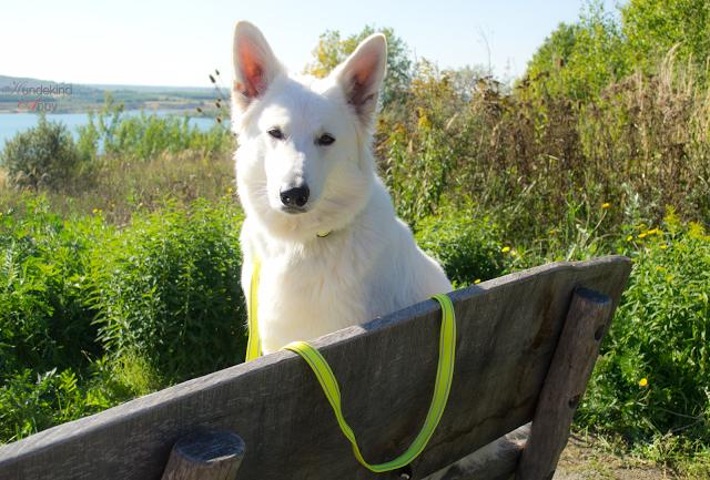 Alcott_3-1 %Hundeblog