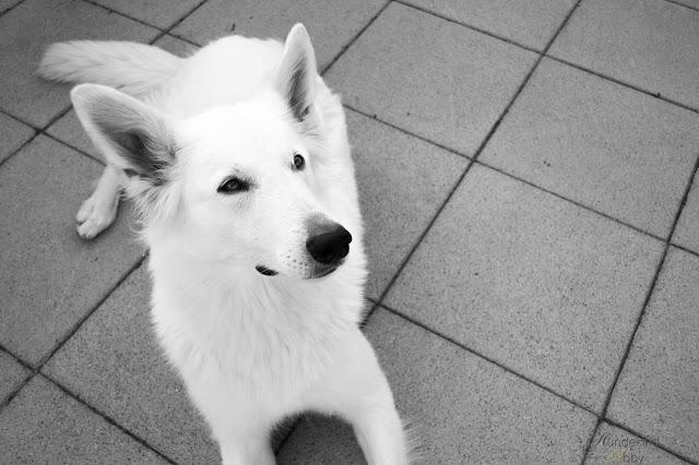 DSC_0702-1 %Hundeblog