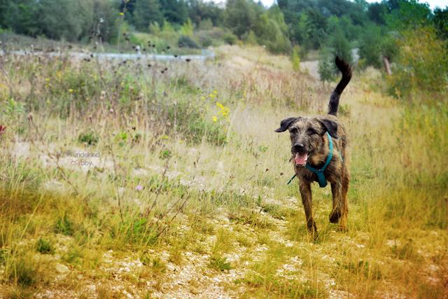 DSC_0991-1 %Hundeblog