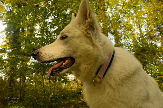 DSC_1126-1 %Hundeblog