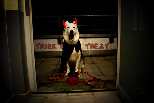 Monatspfoto_November1-1 %Hundeblog