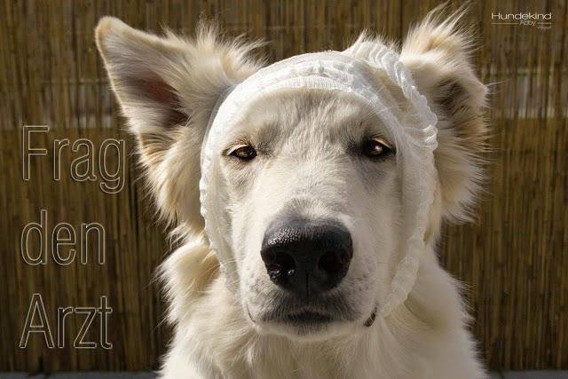 FragdenArzt-1 %Hundeblog