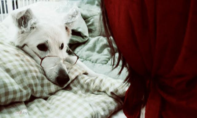 RotkC3A4ppchen-1 %Hundeblog