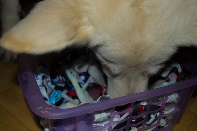 DIY-Korbschnueffeln-1 %Hundeblog