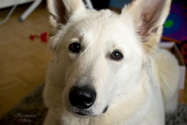 Gluecksfee-1 %Hundeblog