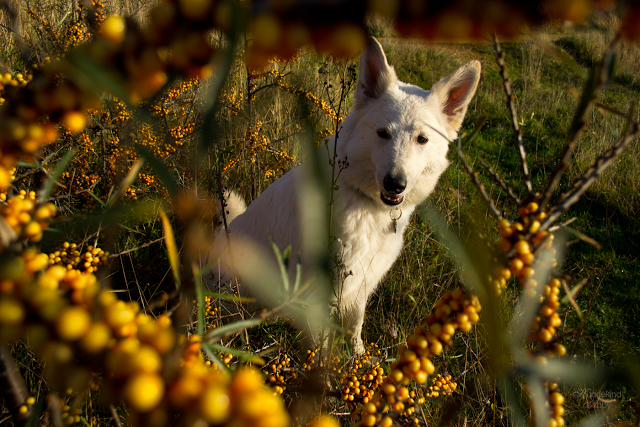 Hundekind2-1 %Hundeblog