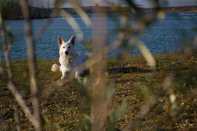 Hundekind3-1 %Hundeblog