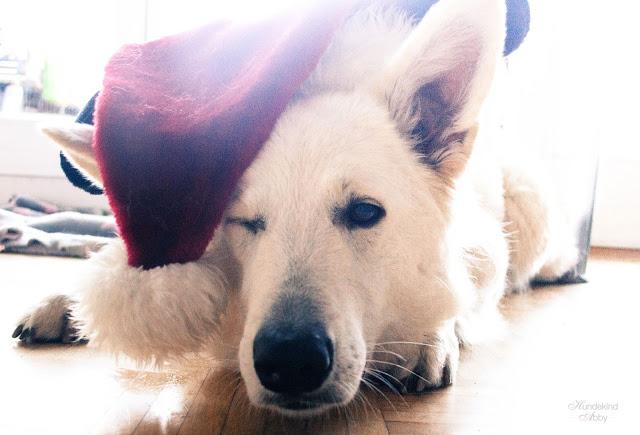 Nikolaus-1 %Hundeblog
