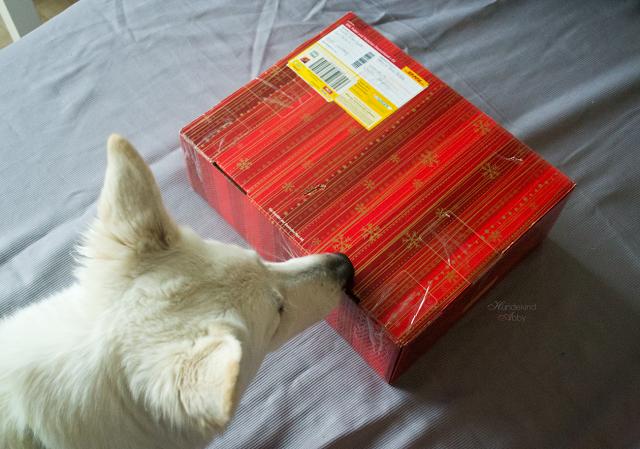 Weihnachtswichtel-paket-1 %Hundeblog