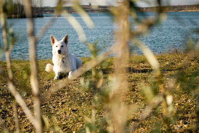 Abby8-1 %Hundeblog
