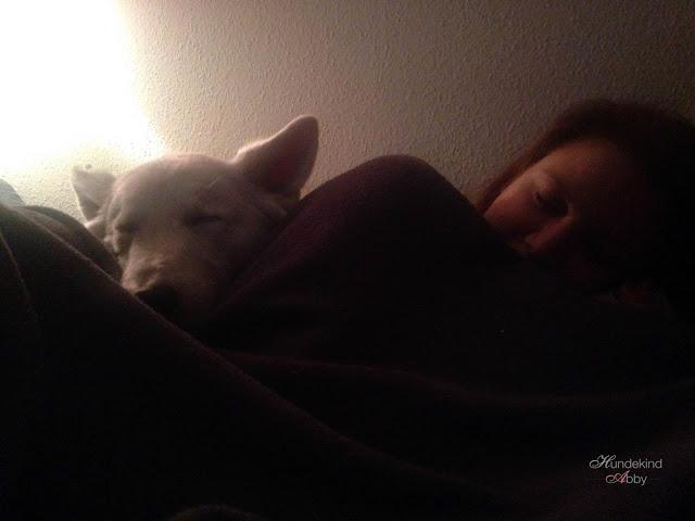Januar-1 %Hundeblog