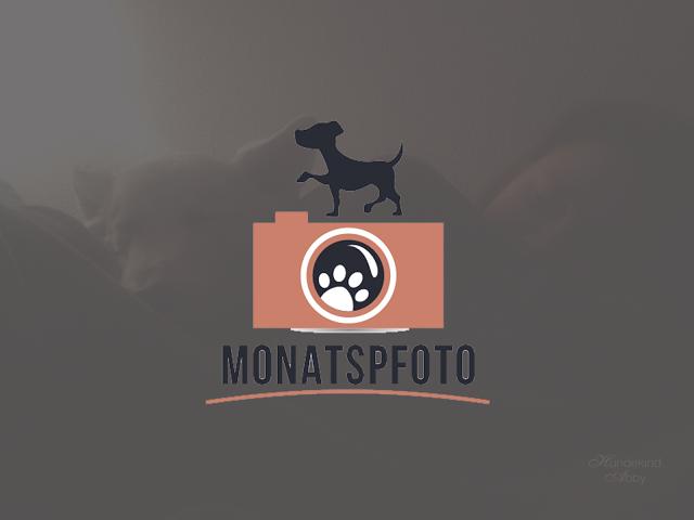 Januar_Vorschau-1 %Hundeblog