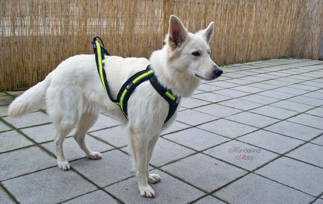 Zuggeschirr-1 %Hundeblog