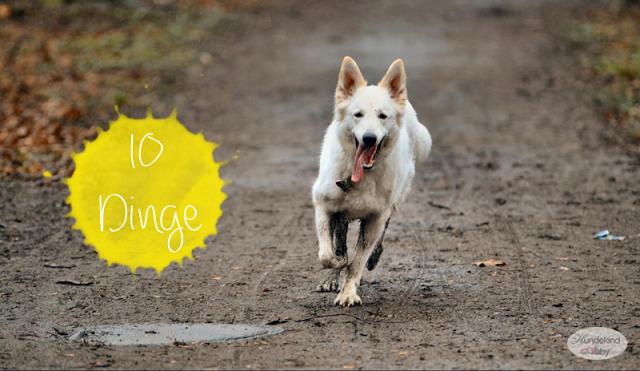 10Dinge-1 %Hundeblog