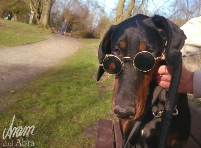 Aram-1 %Hundeblog