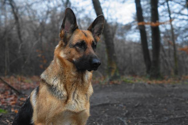 Queen-1 %Hundeblog