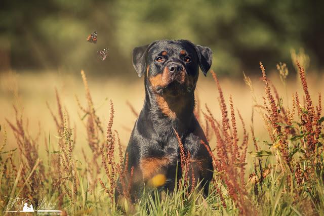 Shila-1 %Hundeblog