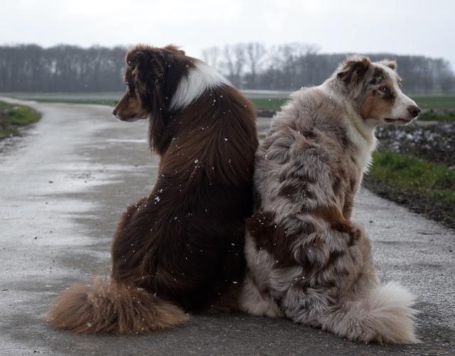 SukiJussi-1 %Hundeblog