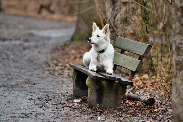 Bild2-1 %Hundeblog