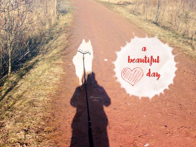 canicross_beautifulday-1 %Hundeblog