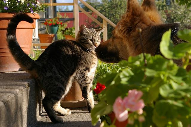 cat-793276_1920-1 %Hundeblog