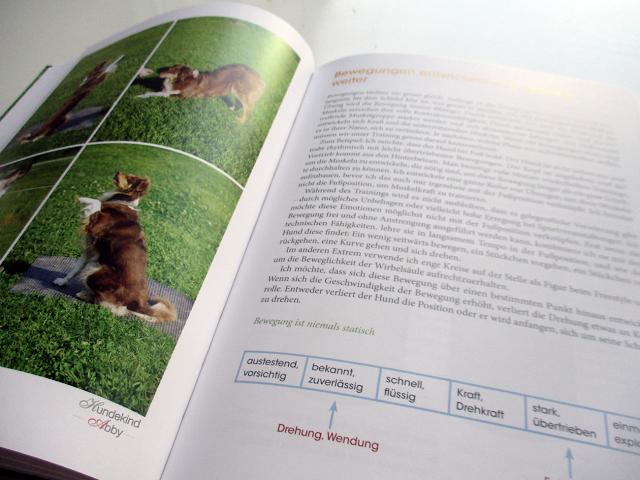 Bewegungsspiele-1 %Hundeblog