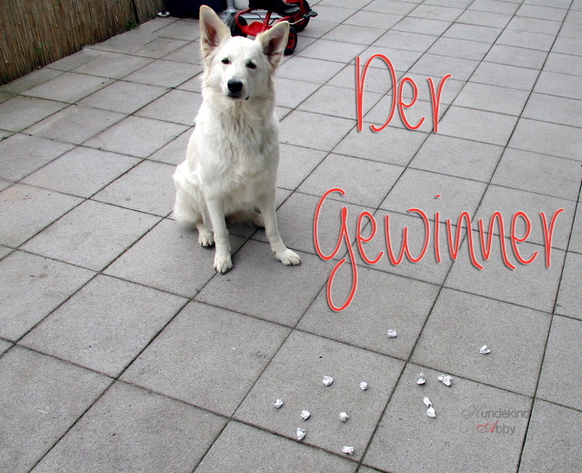 Gewinner-Titelbild-1 %Hundeblog