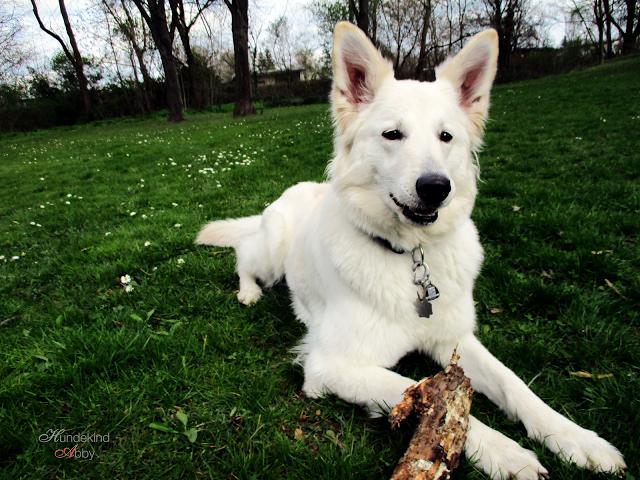 IMG_0209-1 %Hundeblog