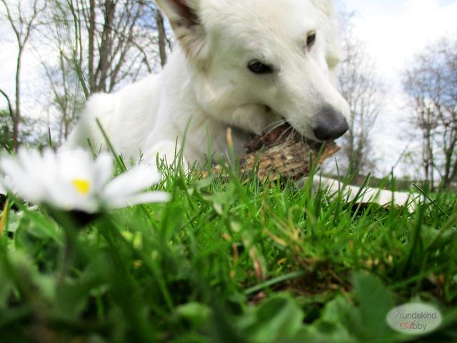 IMG_0215-1 %Hundeblog