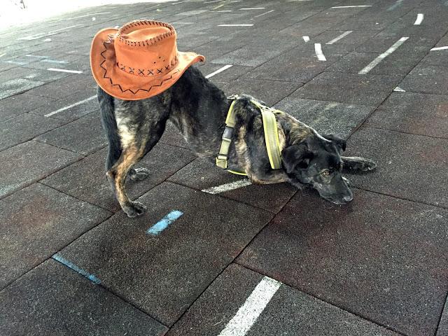 Mathilda-verbeugen-1 %Hundeblog