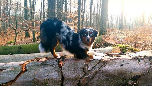 Mila-verbeugen-1 %Hundeblog