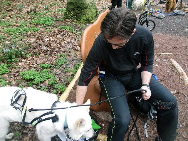 Zughundesport-1 %Hundeblog