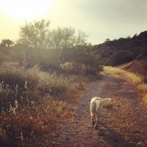 Spaziergang-1 %Hundeblog