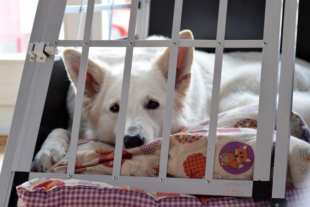 Boxtraining28129-1 %Hundeblog