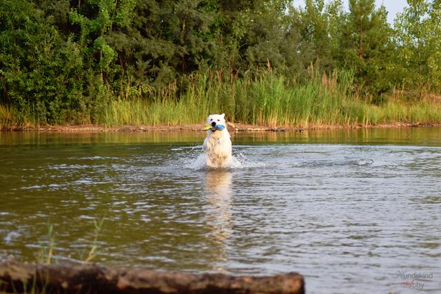 Abby-Sommer3-1 %Hundeblog
